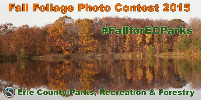 Fall Foliage Contest