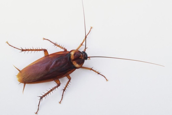 what is a cockroaches habitat